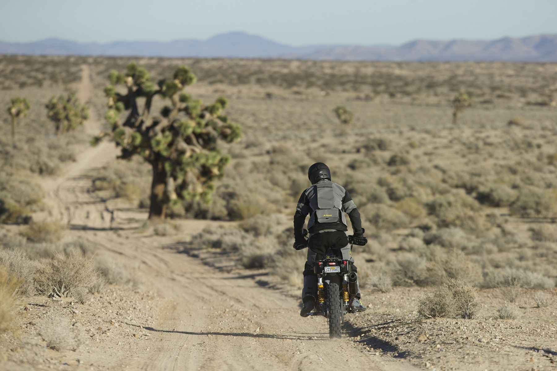 Jim in the Mojave with a Joshua Tree
